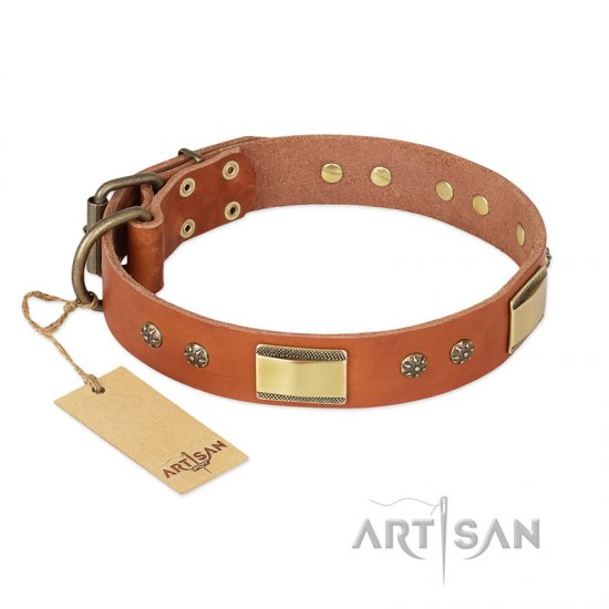 'Enchanting Spectacle' FDT Artisan Pitbull Tan Leather Dog Collar with Golden-Like Studs - 1 1/2 inch (40 mm) wide