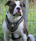 PITBULL BEST DOG HARNESS- ROYAL PADDED LEATHER HARNESS