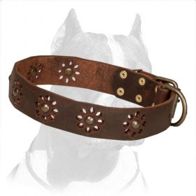 'Spring Mood' Pitbull Dog Collar with Punched Flowers