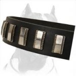 Sturdy Dog Collar with nickel plates made for Pitbull