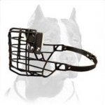 Pitbull Wire Basket Muzzle for Winter Walking
