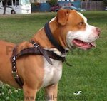 Pitbull leather dog harness for tracking,pulling walking