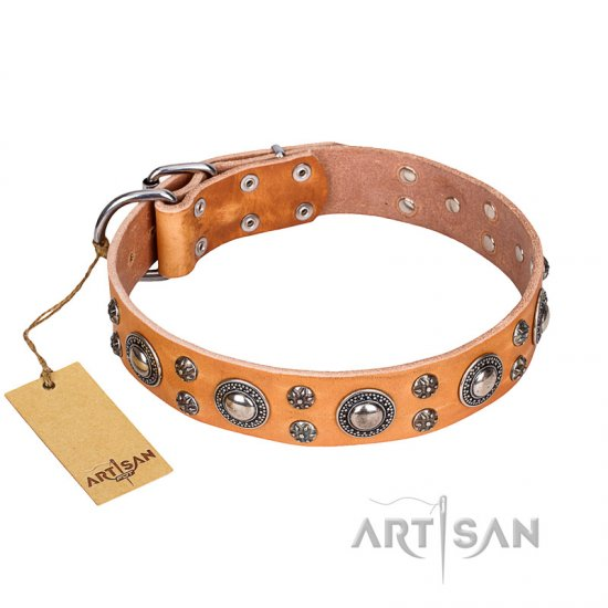 """Extra Sparkle"" FDT Artisan Genuine Leather Pitbull Collar of Tan Color"