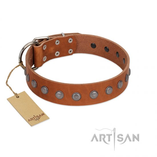 """Little Floret"" Fashionable FDT Artisan Tan Leather Pitbull Collar with Silver-Like Adornments - Click Image to Close"