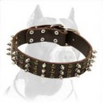 Best Studs and Spikes Leather Dog Collar for Pitbull