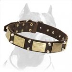 Pitbull Leather Dog Collar with brass plates and nickel studs