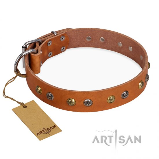 'Golden'n'Silver Luxury' FDT Artisan Leather Pitbull Collar with Engraved Studs