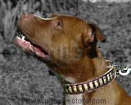 leather dog collar , nylon dog collar, spiked dog collar for APBT