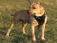 Agitation/Protection Leather Dog Harness