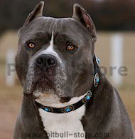Pitbull Leather Dog Collar & Silver Plated Circles Blue Stones