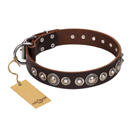 """Step and Sparkle"" FDT Artisan Brown Leather Pitbull Collar with Chrome Plated Decor"