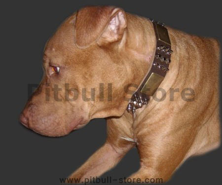 Leather Spiked Pitbull Collar made to last