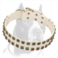 White Leather Pitbull Dog Collar with Square Nickel Studs