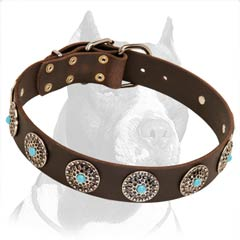 Pitbull Leather Dog Collar with Silver Plated Circles & Blue Stones
