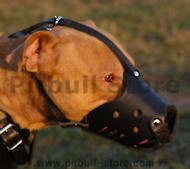 Pitbull Everyday Leather Muzzle