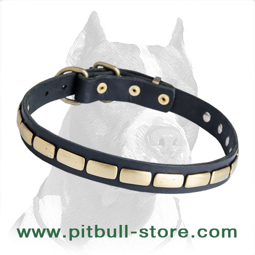 A Marvellous Leather Collar with Brass Plates for Pitbull Breed