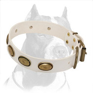 White Pitbull Dog Collar with Brass Oval Plates