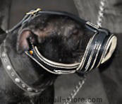 Pitbull Royal Nappa Padded Leather Muzzle