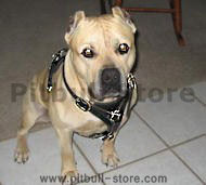 Pitbull/Amstaff Walking dog harness-Leather Dog Harness