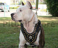 Royal Dog Harness - Exclusive Design Studded Leather Harness