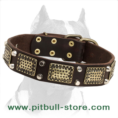 Leather dog collar for Pitbulls extra strong with gorgeous look