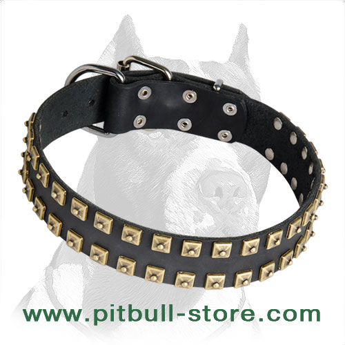 Durable leather Pitbull collar with brass pyramids