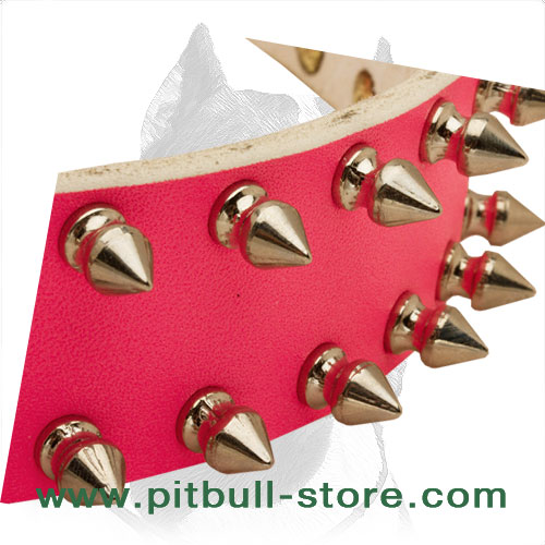 Easily adjustable leather dog collar for your she-Pitbull with spikes
