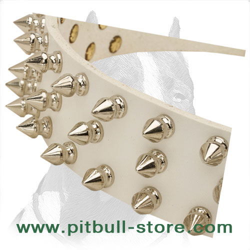White leather spiked collar for amazing look of your Pitbull