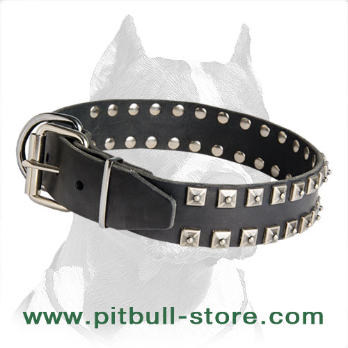 Pitbull collar awesome decor with rust-resistant fixtures
