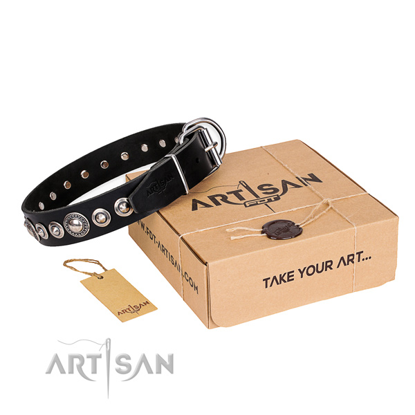 Incredible full grain natural leather dog collar for everyday walking