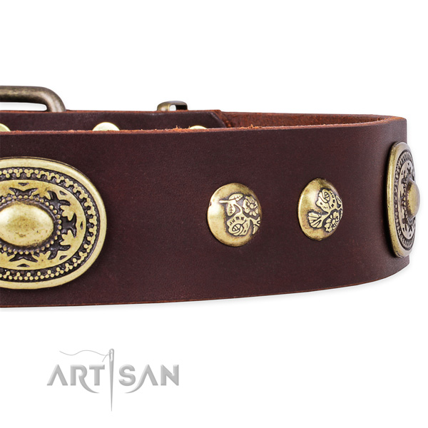 Everyday walking natural genuine leather collar with rust resistant buckle and D-ring