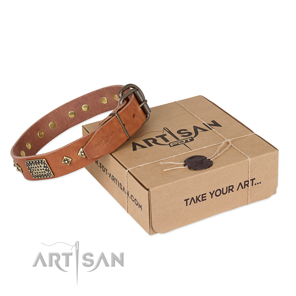 Fashionable leather dog collar for everyday use