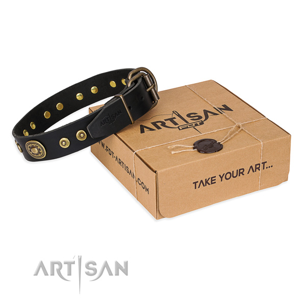 Fashionable full grain leather dog collar for walking in style