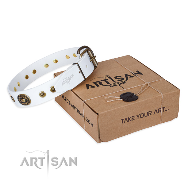 Finest quality full grain natural leather dog collar for daily walking