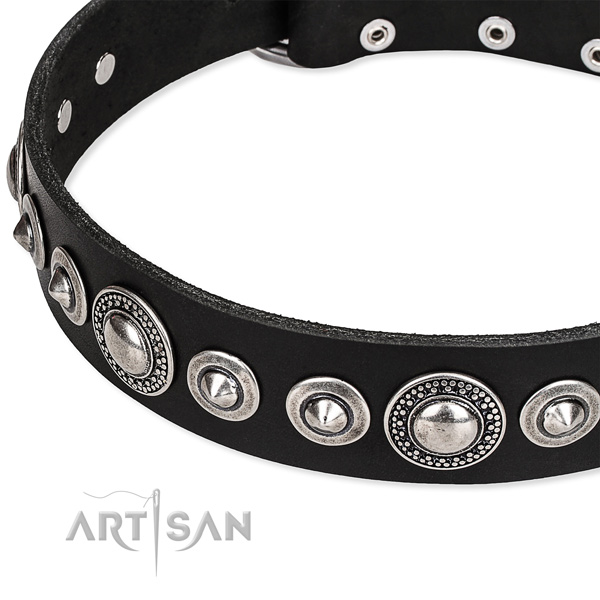 Adjustable leather Pitbull collar with extra strong non-rusting set of hardware