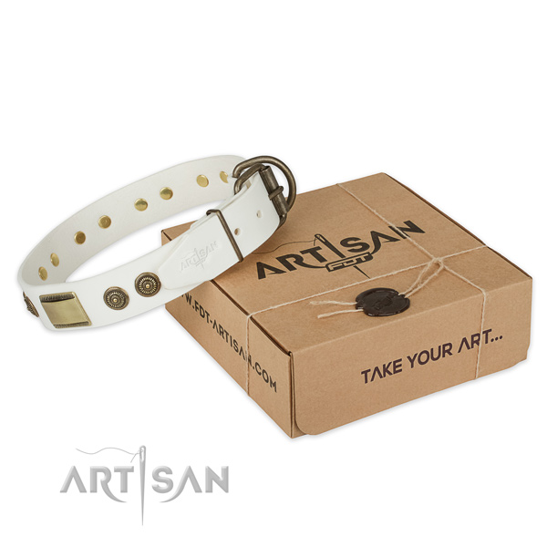 Best quality full grain leather dog collar for everyday walking