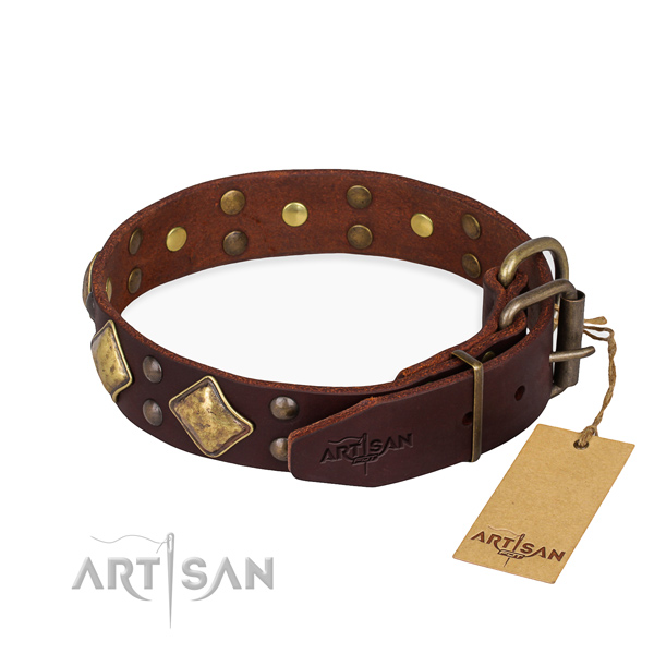 Stylish leather collar for your beloved four-legged friend