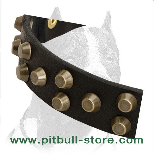 Dog Collar for Pitbull of high-quality leather