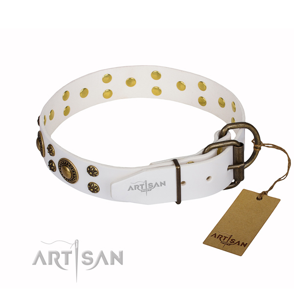 Versatile leather collar for your handsome canine