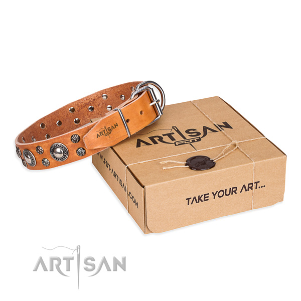 Day-to-day leather dog collar with amazing embellishments