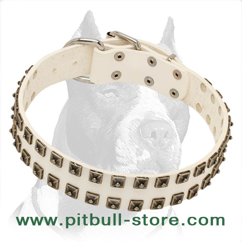 Leather collar for Pitbull handcrafted with nickel-plated fittings