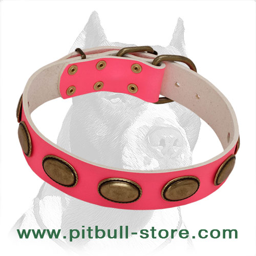 Glamorous & Stylish dog collar for female Pitbulls