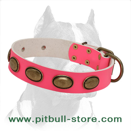 Pitbull dog collar made of soft denuine leather decorated with brass plates and fixtures