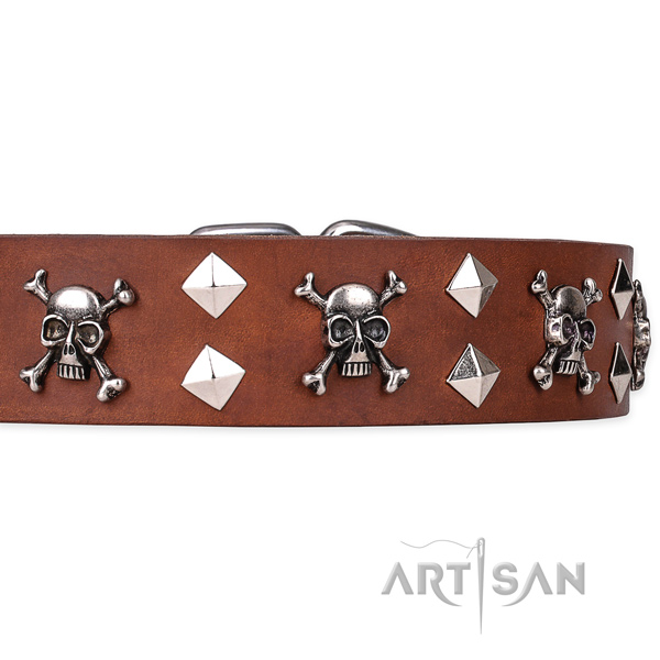 Casual style leather dog collar with amazing adornments