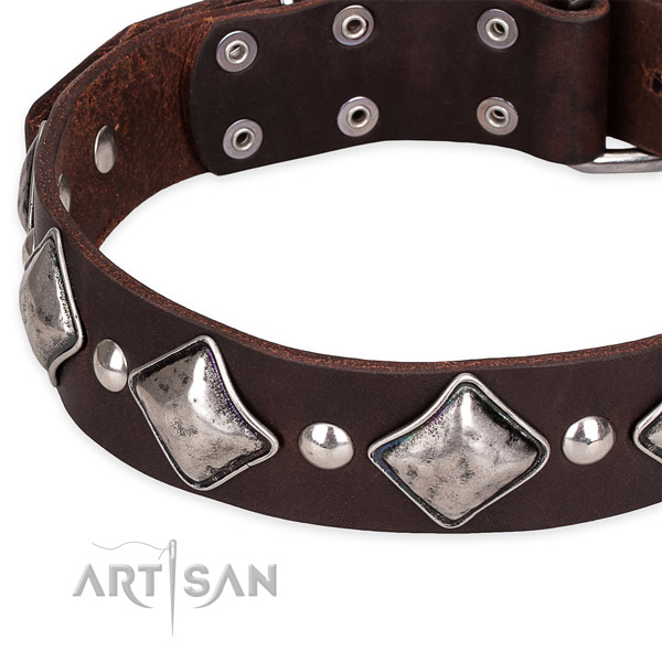 Quick to fasten leather dog collar with resistant to tear and wear chrome plated set of hardware