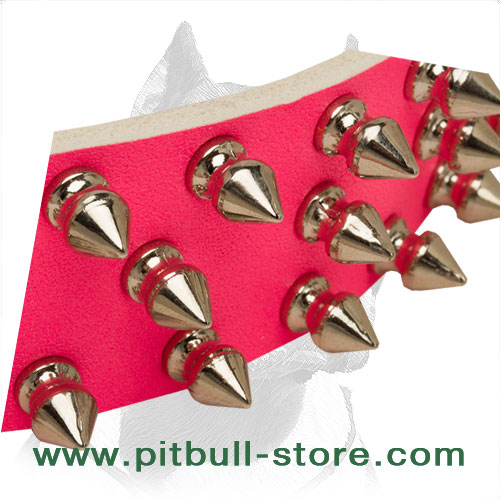 Spiked dog collar for top-fashionable Pitbulls