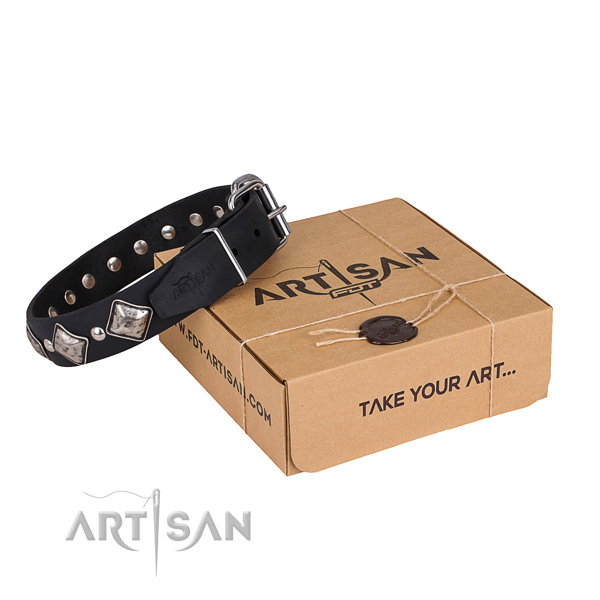 Everyday leather dog collar with exciting studs