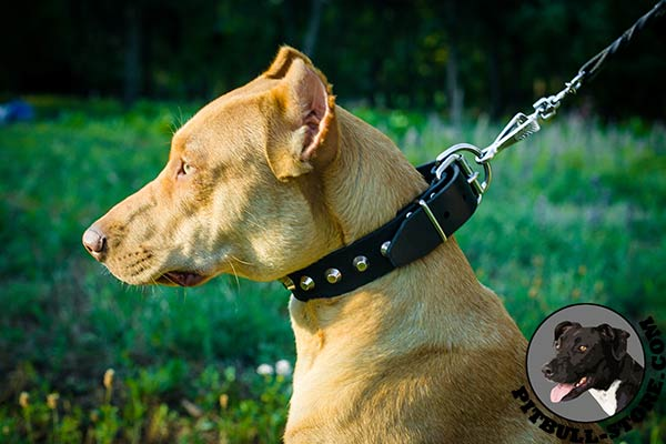 Pitbull dog collar of soft leather