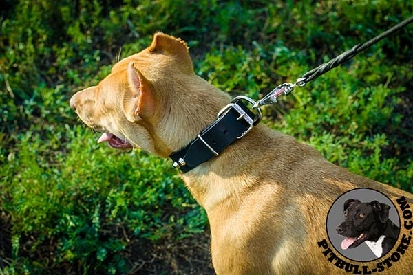 Natural leather Pitbull collar with shiny hardware