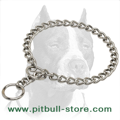Dog chrome plated metal choke collar for Pit Bulls
